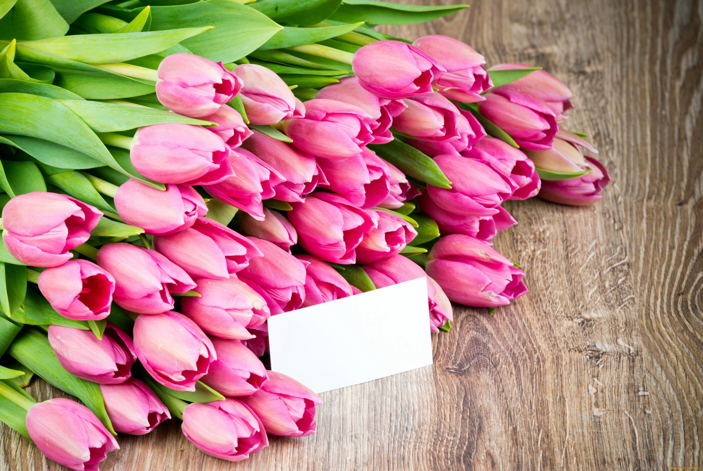 интернете картинки красивые цветы тюльпаны розовые означает то, что